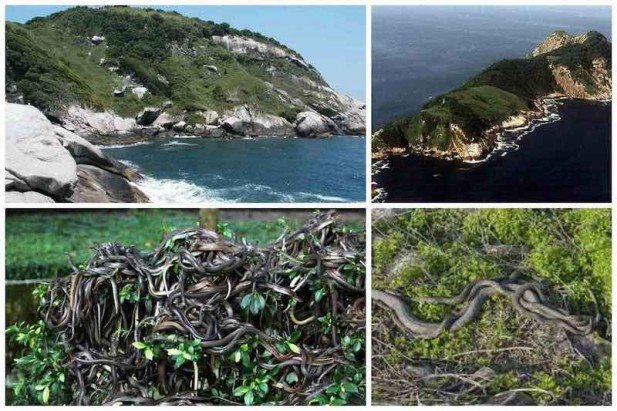 Queimada Grandi cea mai periculoasa insula din lume