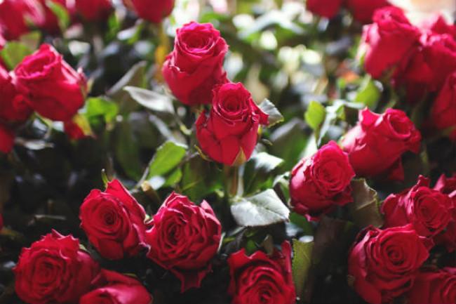 Trandafirii roșii - simbol al iubirii