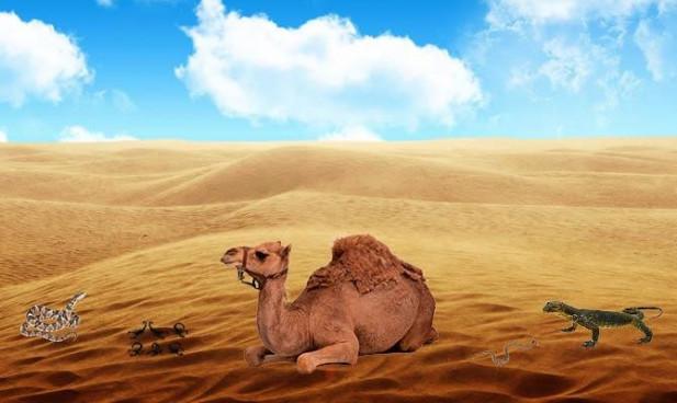 Cele mai fascinante curiozitati despre desert