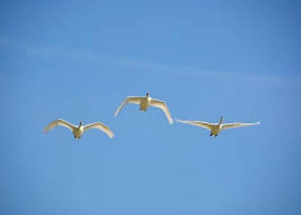 Povestea zborului II