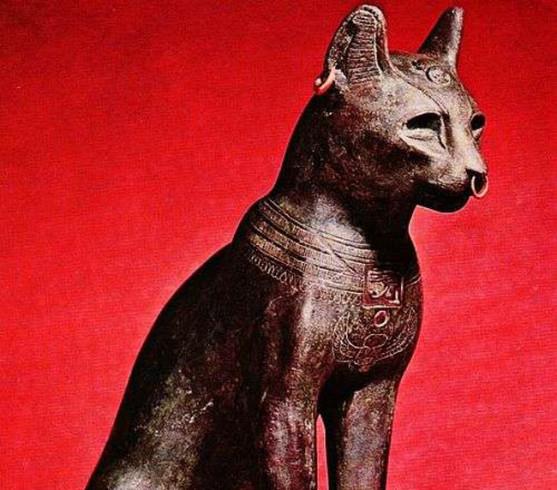Controversata istorie a pisicii