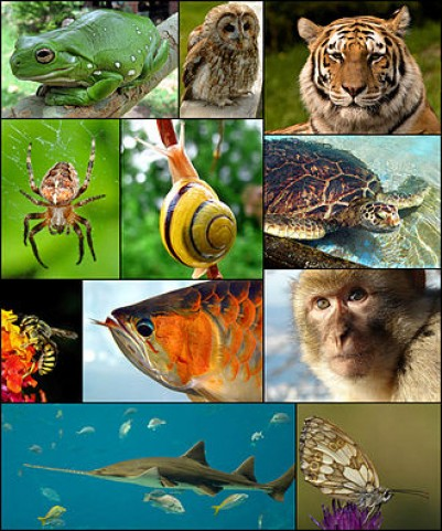 Simturile animalelor