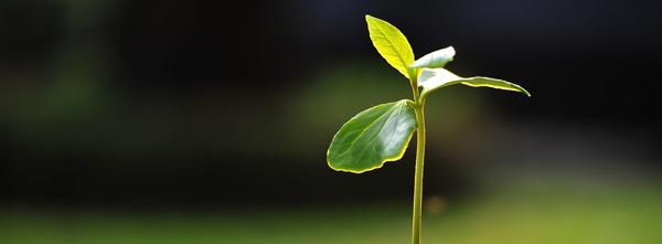 Secretele necunoscute ale naturii si mediului inconjurator
