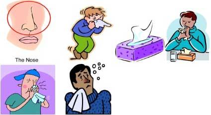 Igiena nasului