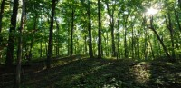 7 lucruri pe care nu le stiai despre arbori