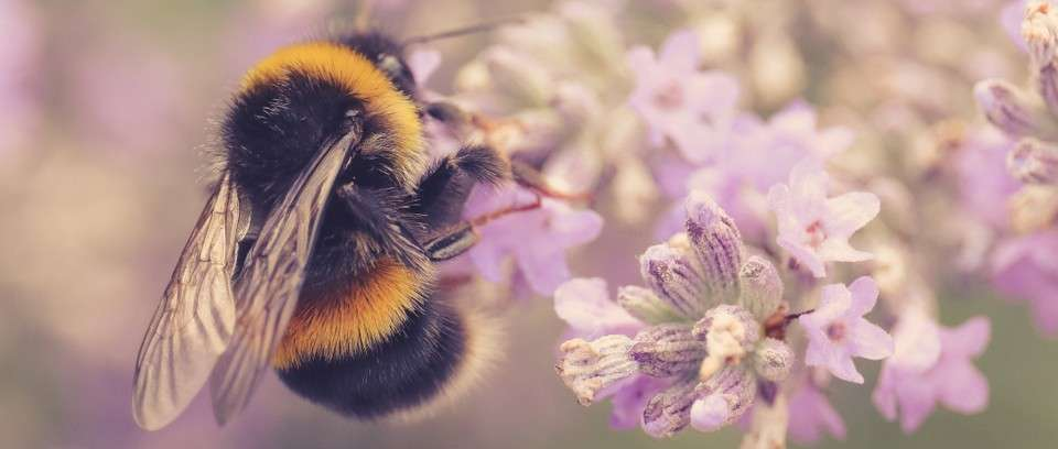 Ce se va intimpla daca vor disparea albinele