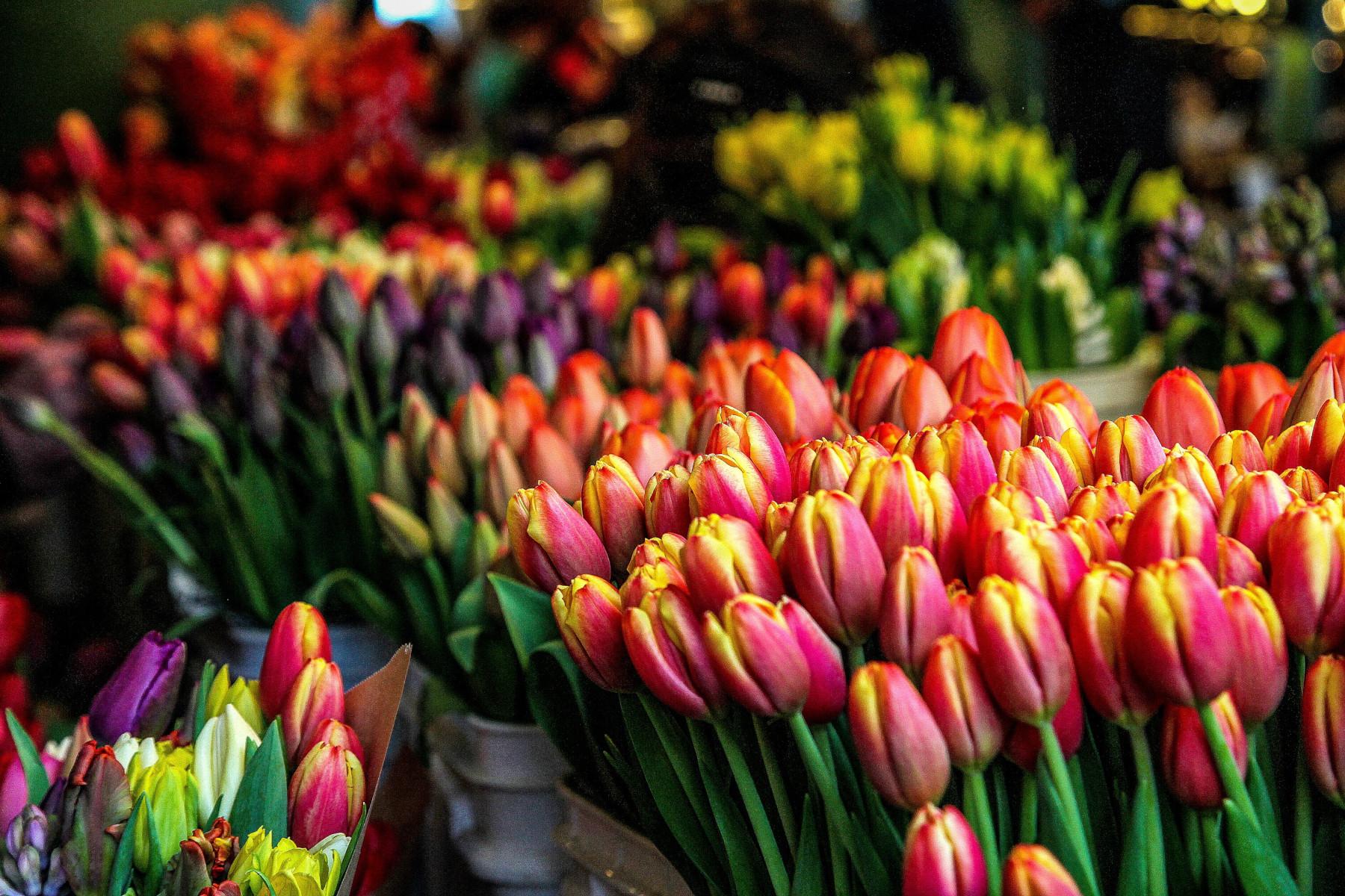 Lalelele: cele mai populare flori de primavara