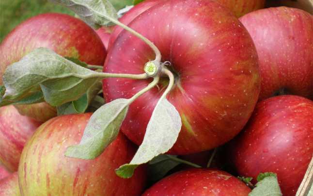 Beneficiile merelor pentru sanatatea copiilor