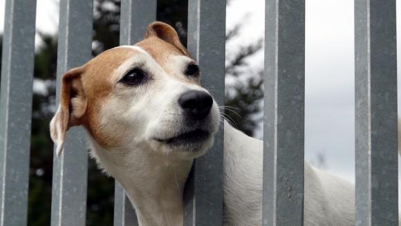 De ce câinii îşi aşteaptă uneori stăpânii decedaţi şi ani de zile?